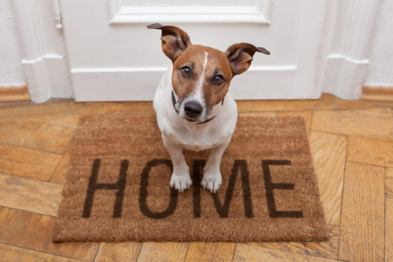 Things You Should Do Before leaving Your Dog Home Alone