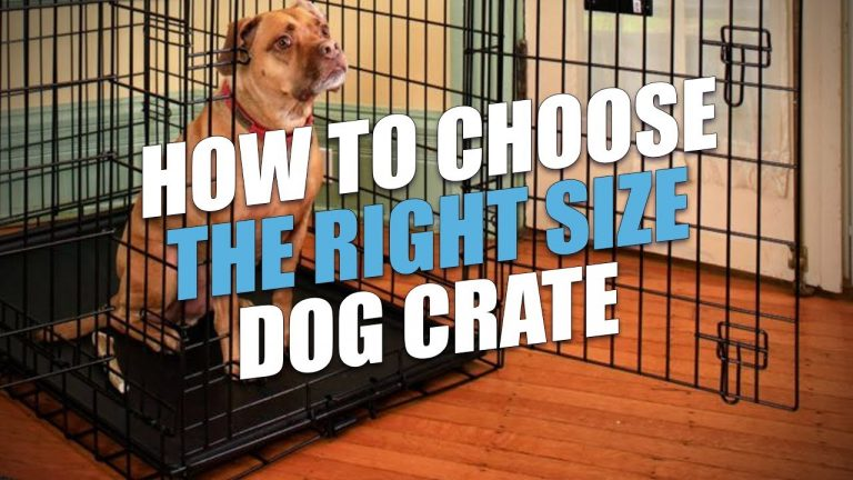 Dog Crate Sizes: What You Need to Know before Buying